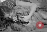 Image of Pet lion in captivity Illinois United States USA, 1954, second 35 stock footage video 65675041493