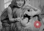 Image of Pet lion in captivity Illinois United States USA, 1954, second 38 stock footage video 65675041493