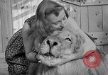 Image of Pet lion in captivity Illinois United States USA, 1954, second 39 stock footage video 65675041493