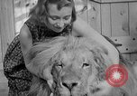 Image of Pet lion in captivity Illinois United States USA, 1954, second 40 stock footage video 65675041493