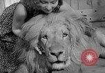 Image of Pet lion in captivity Illinois United States USA, 1954, second 41 stock footage video 65675041493
