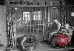 Image of Pet lion in captivity Illinois United States USA, 1954, second 46 stock footage video 65675041493