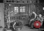 Image of Pet lion in captivity Illinois United States USA, 1954, second 49 stock footage video 65675041493