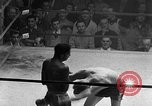 Image of Golden Gloves Light middleweight boxing  New York City USA, 1954, second 50 stock footage video 65675041494