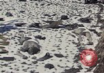 Image of Destroyed Army convoy Hoengsong Korea, 1951, second 9 stock footage video 65675041573