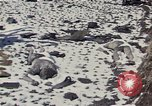 Image of Destroyed Army convoy Hoengsong Korea, 1951, second 13 stock footage video 65675041573