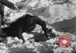 Image of Blue Division Spanish forces under Commander Grandes World War 2 Leningrad Russia Soviet Union, 1942, second 14 stock footage video 65675041932