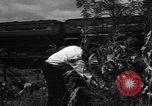 Image of victory gardens Chicago Illinois USA, 1943, second 39 stock footage video 65675042217