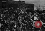 Image of victory gardens Chicago Illinois USA, 1943, second 42 stock footage video 65675042217