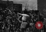 Image of victory gardens Chicago Illinois USA, 1943, second 43 stock footage video 65675042217
