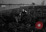 Image of victory gardens Chicago Illinois USA, 1943, second 56 stock footage video 65675042217
