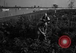 Image of victory gardens Chicago Illinois USA, 1943, second 57 stock footage video 65675042217