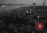 Image of victory gardens Chicago Illinois USA, 1943, second 58 stock footage video 65675042217