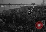 Image of victory gardens Chicago Illinois USA, 1943, second 59 stock footage video 65675042217