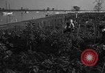 Image of victory gardens Chicago Illinois USA, 1943, second 62 stock footage video 65675042217