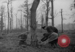 Image of Germans cutting trees for fuel in Berlin after World War 2 Berlin Germany, 1945, second 12 stock footage video 65675042630