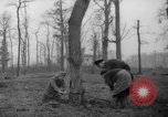 Image of Germans cutting trees for fuel in Berlin after World War 2 Berlin Germany, 1945, second 13 stock footage video 65675042630