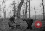 Image of Germans cutting trees for fuel in Berlin after World War 2 Berlin Germany, 1945, second 14 stock footage video 65675042630