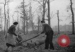 Image of Germans cutting trees for fuel in Berlin after World War 2 Berlin Germany, 1945, second 15 stock footage video 65675042630