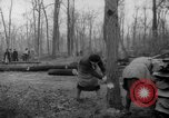 Image of Germans cutting trees for fuel in Berlin after World War 2 Berlin Germany, 1945, second 20 stock footage video 65675042630