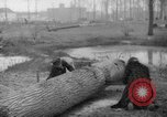Image of Germans cutting trees for fuel in Berlin after World War 2 Berlin Germany, 1945, second 38 stock footage video 65675042630