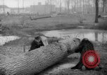 Image of Germans cutting trees for fuel in Berlin after World War 2 Berlin Germany, 1945, second 40 stock footage video 65675042630