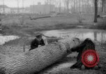 Image of Germans cutting trees for fuel in Berlin after World War 2 Berlin Germany, 1945, second 42 stock footage video 65675042630
