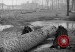 Image of Germans cutting trees for fuel in Berlin after World War 2 Berlin Germany, 1945, second 44 stock footage video 65675042630
