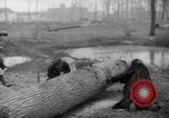 Image of Germans cutting trees for fuel in Berlin after World War 2 Berlin Germany, 1945, second 45 stock footage video 65675042630