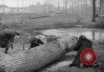 Image of Germans cutting trees for fuel in Berlin after World War 2 Berlin Germany, 1945, second 46 stock footage video 65675042630