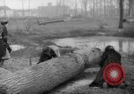 Image of Germans cutting trees for fuel in Berlin after World War 2 Berlin Germany, 1945, second 47 stock footage video 65675042630