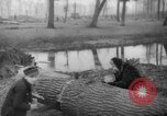 Image of Germans cutting trees for fuel in Berlin after World War 2 Berlin Germany, 1945, second 55 stock footage video 65675042630