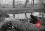 Image of Germans cutting trees for fuel in Berlin after World War 2 Berlin Germany, 1945, second 58 stock footage video 65675042630