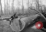 Image of Germans cutting trees for fuel in Berlin after World War 2 Berlin Germany, 1945, second 62 stock footage video 65675042630