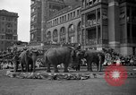 Image of Ringling Brothers Barnum and Bailey circus New York United States USA, 1936, second 12 stock footage video 65675042780