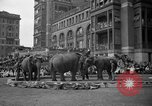 Image of Ringling Brothers Barnum and Bailey circus New York United States USA, 1936, second 15 stock footage video 65675042780