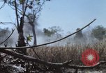 Image of 1st Australian task force South Vietnam, 1968, second 19 stock footage video 65675042955