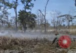 Image of 1st Australian task force South Vietnam, 1968, second 22 stock footage video 65675042955