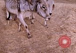 Image of Indian village India, 1956, second 15 stock footage video 65675043053