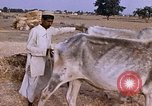 Image of Indian village India, 1956, second 19 stock footage video 65675043053