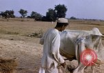 Image of Indian village India, 1956, second 24 stock footage video 65675043053