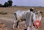 Image of Indian village India, 1956, second 26 stock footage video 65675043053
