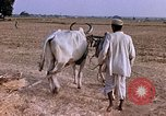 Image of Indian village India, 1956, second 28 stock footage video 65675043053
