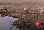 Image of Indian village India, 1956, second 48 stock footage video 65675043053