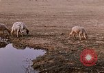 Image of Indian village India, 1956, second 49 stock footage video 65675043053