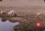 Image of Indian village India, 1956, second 50 stock footage video 65675043053