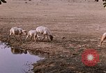 Image of Indian village India, 1956, second 51 stock footage video 65675043053