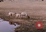 Image of Indian village India, 1956, second 52 stock footage video 65675043053
