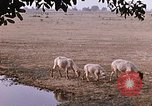 Image of Indian village India, 1956, second 54 stock footage video 65675043053