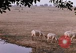 Image of Indian village India, 1956, second 55 stock footage video 65675043053